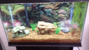 decorate freshwater tank
